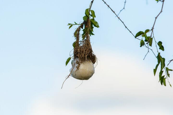 Frog Nest