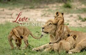 Love Blog Banner