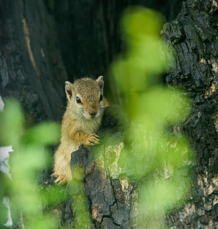 01 Squirrel