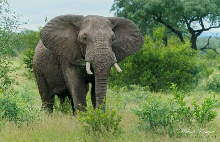 07 Elephant
