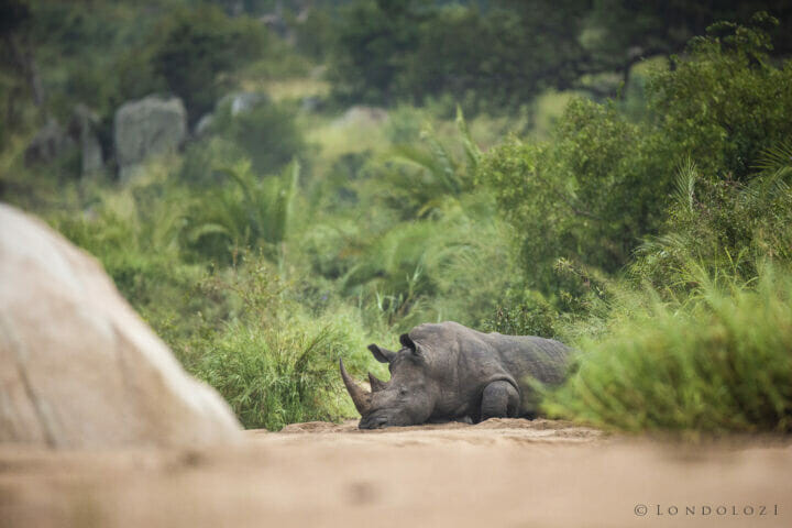 Rhino Manyelethi River