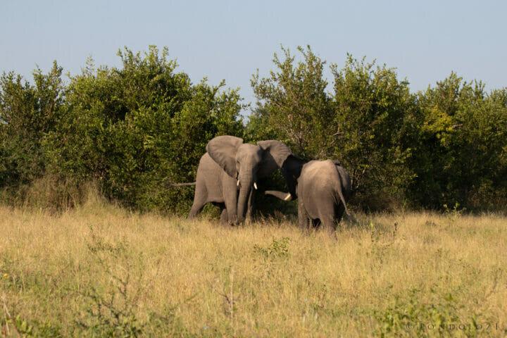 Elephant 2, 29 March 2021, NS