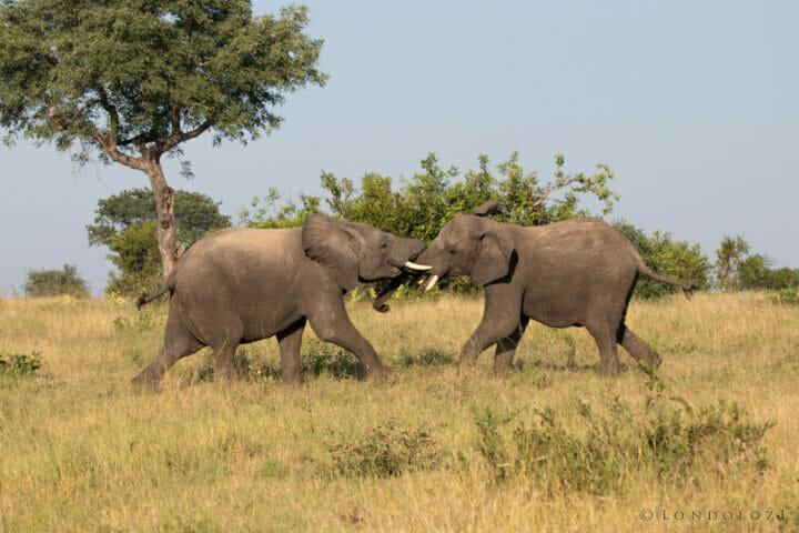 Elephant 3, 29 March 2021, NS