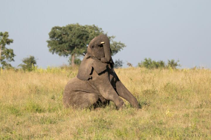 Elephant 1, 29 March 2021, NS