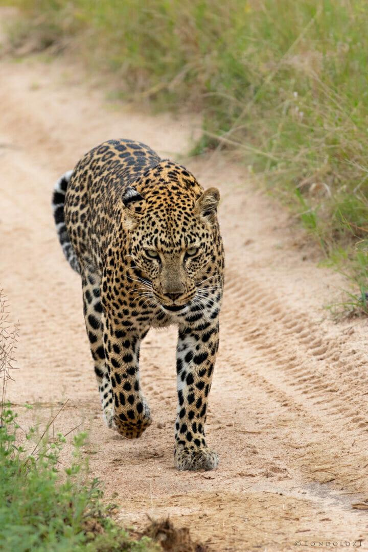 ximungwe walking