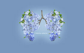 Breathwork, lungs made from flowers