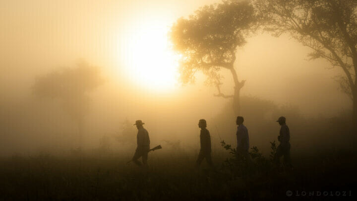 Bush Walk Mist Sunrise