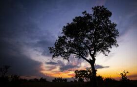 Nkoveni Leopard Silhouette Sunset