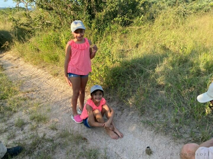 Dung Beetle Kids