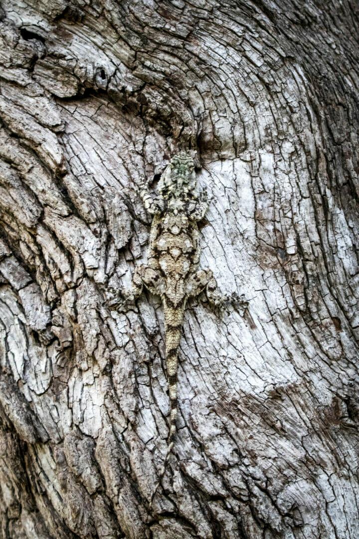 NS Tree Agama