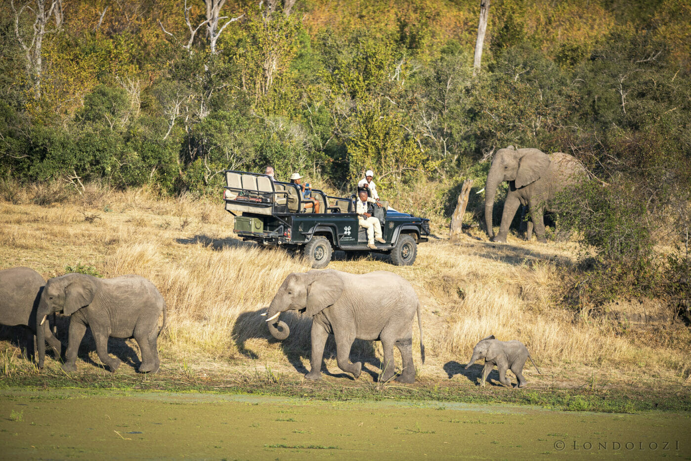 SZ Elephant vehicle LTA Dam