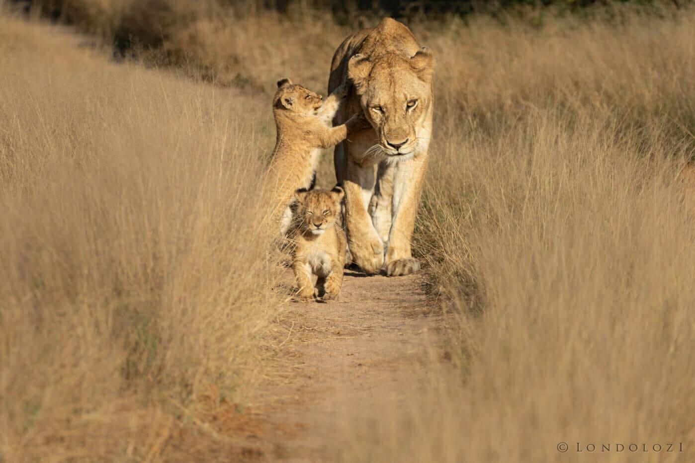 Gb Ntsevu Cubs 2