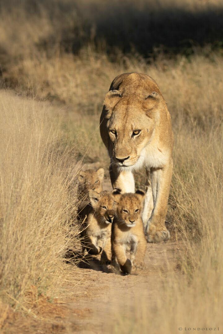 Gb Ntsevu Cubs 5