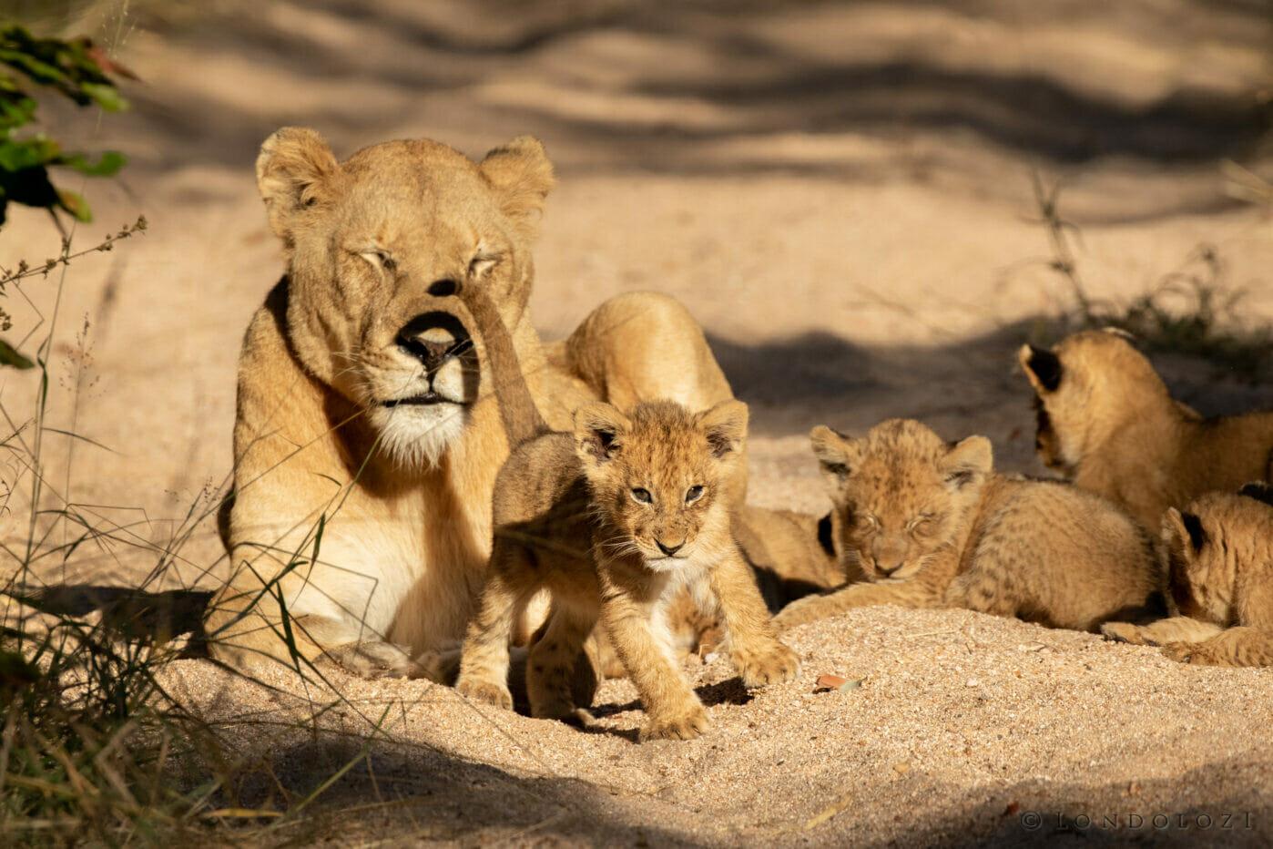 Gb Ntsevu Cubs 7