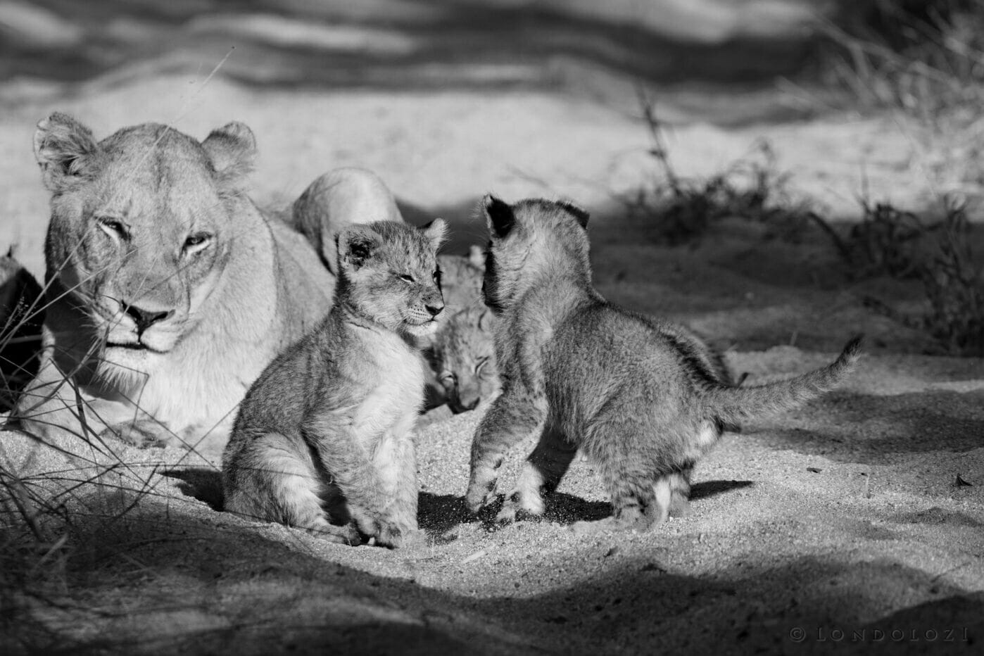 Gb Ntsevu Cubs 8