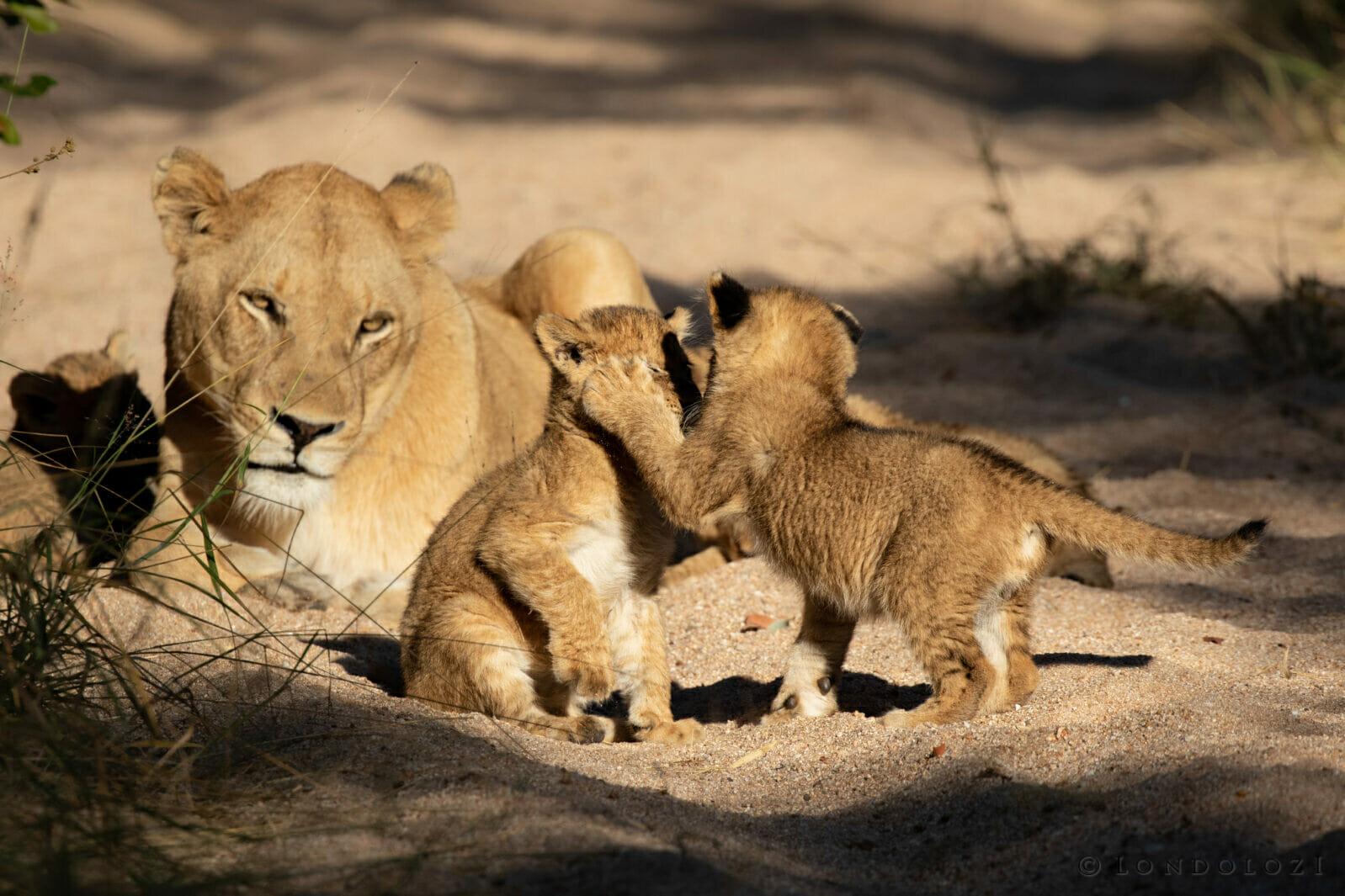 Gb Ntsevu Cubs 9
