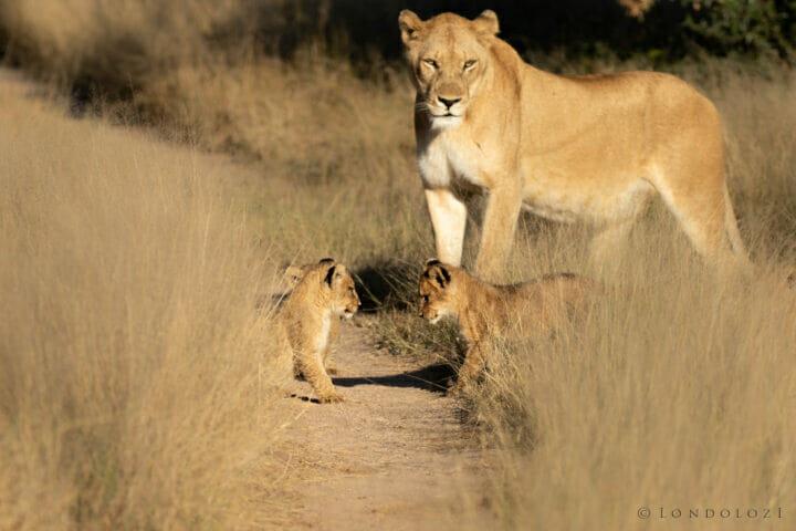 Gb Ntsevu Cubs