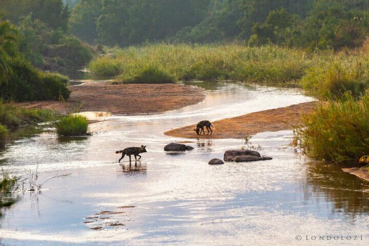 Wild Dog Sand River