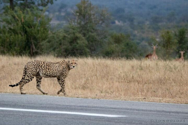 Cheetah Airstrip NS