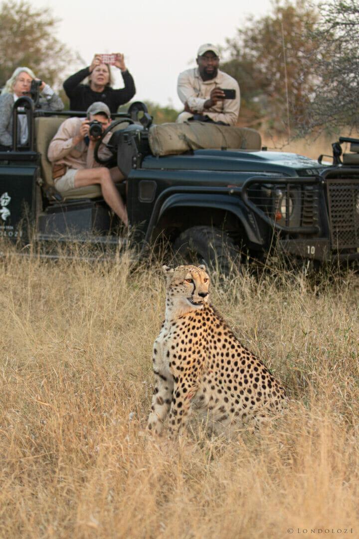 Cheetah Kill Chris Taylor Kng