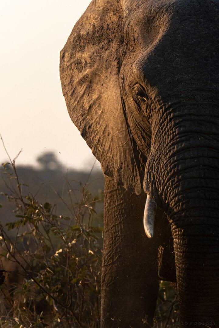 Dlr Dean De La Rey 06 21 Elephant Sunset