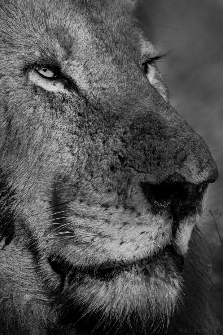 Dlr Dean De La Rey 06 21 Lion Birmingham