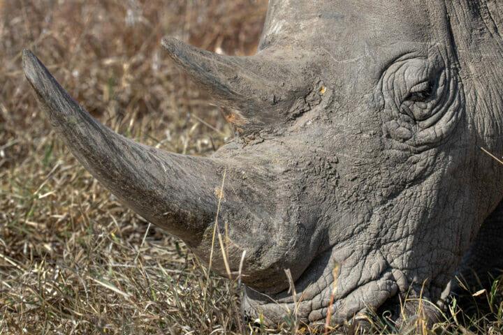 Dlr Dean De La Rey 06 21 Rhino