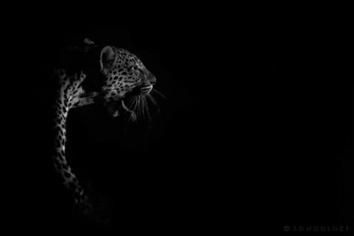 Dlr Dean De La Rey 06 21 Three Rivers Night Black And White