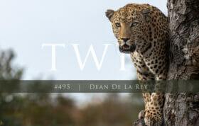 Dean Dlr 495