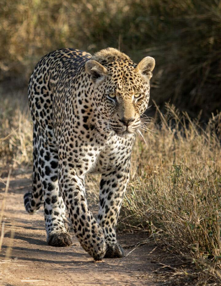 DH Nweti male walk