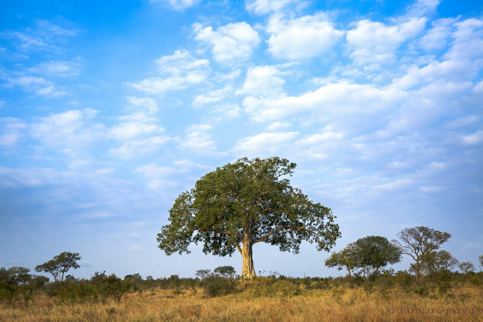 SDZ Landscape Fig Tree Makhotini dam