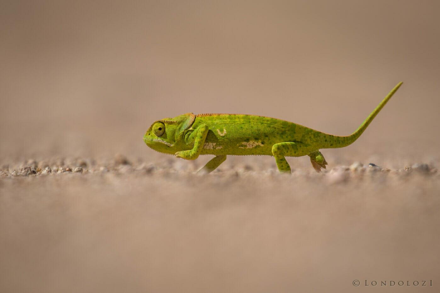 Jts Chameleon Low Angle