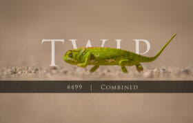 Twip #499 Chameleon