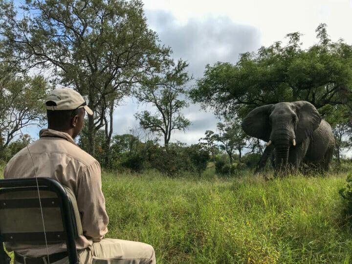 Trevor With Elephant (2)
