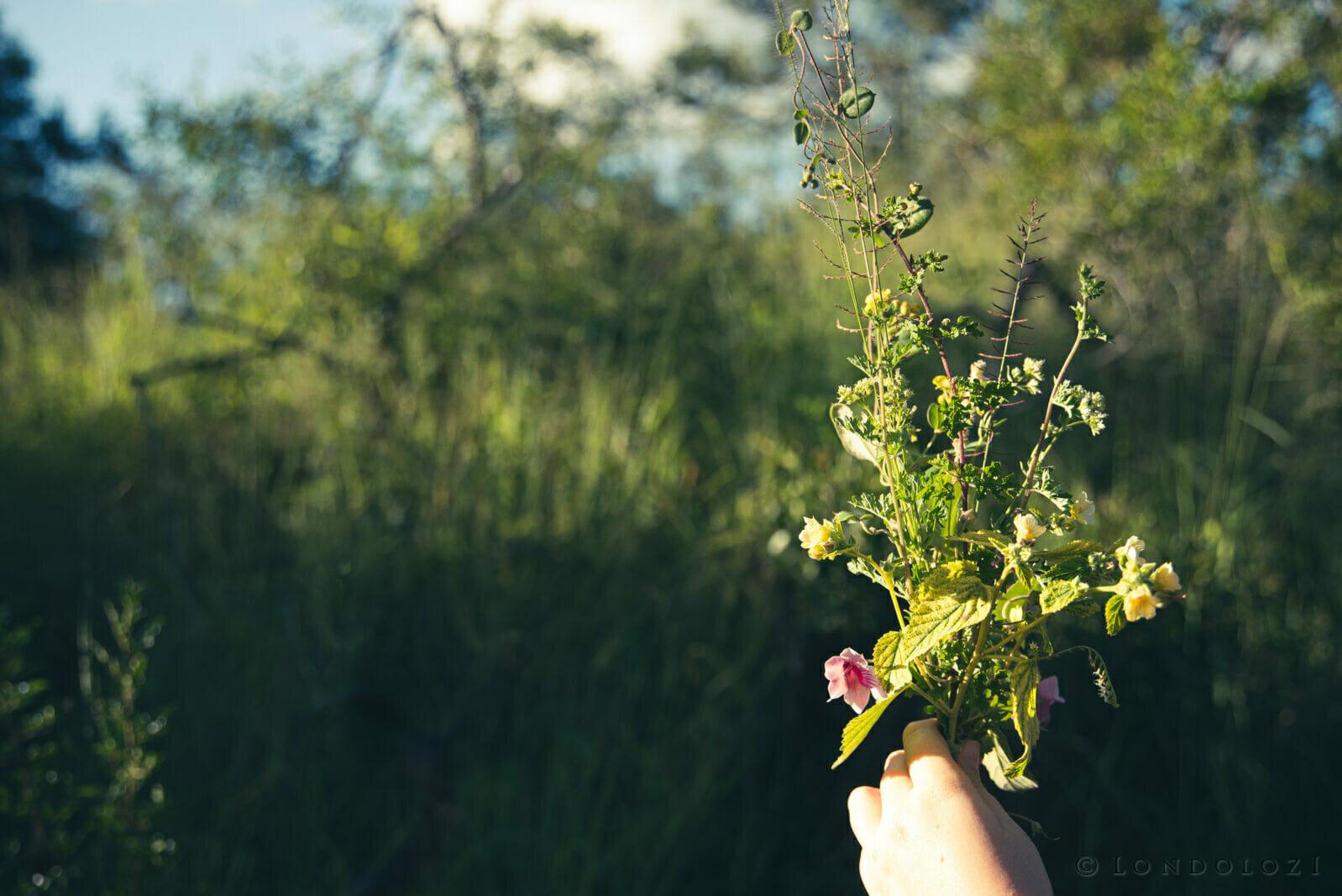 Wild Flowers A Rtichie 9001