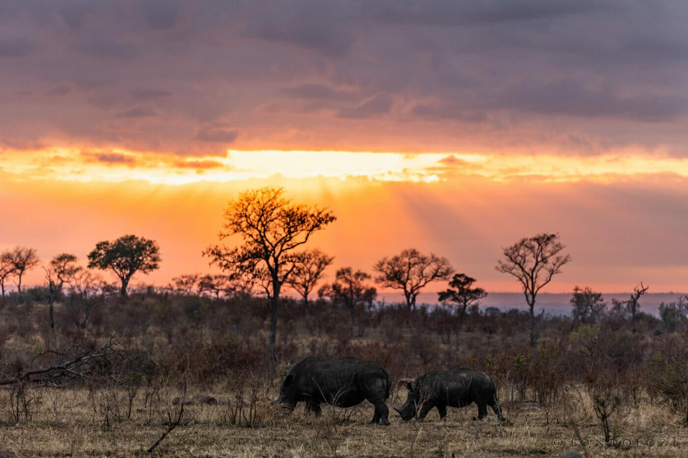 Gb Rhino Sunrise