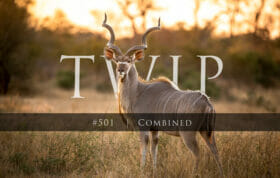 Twip #501 Combined