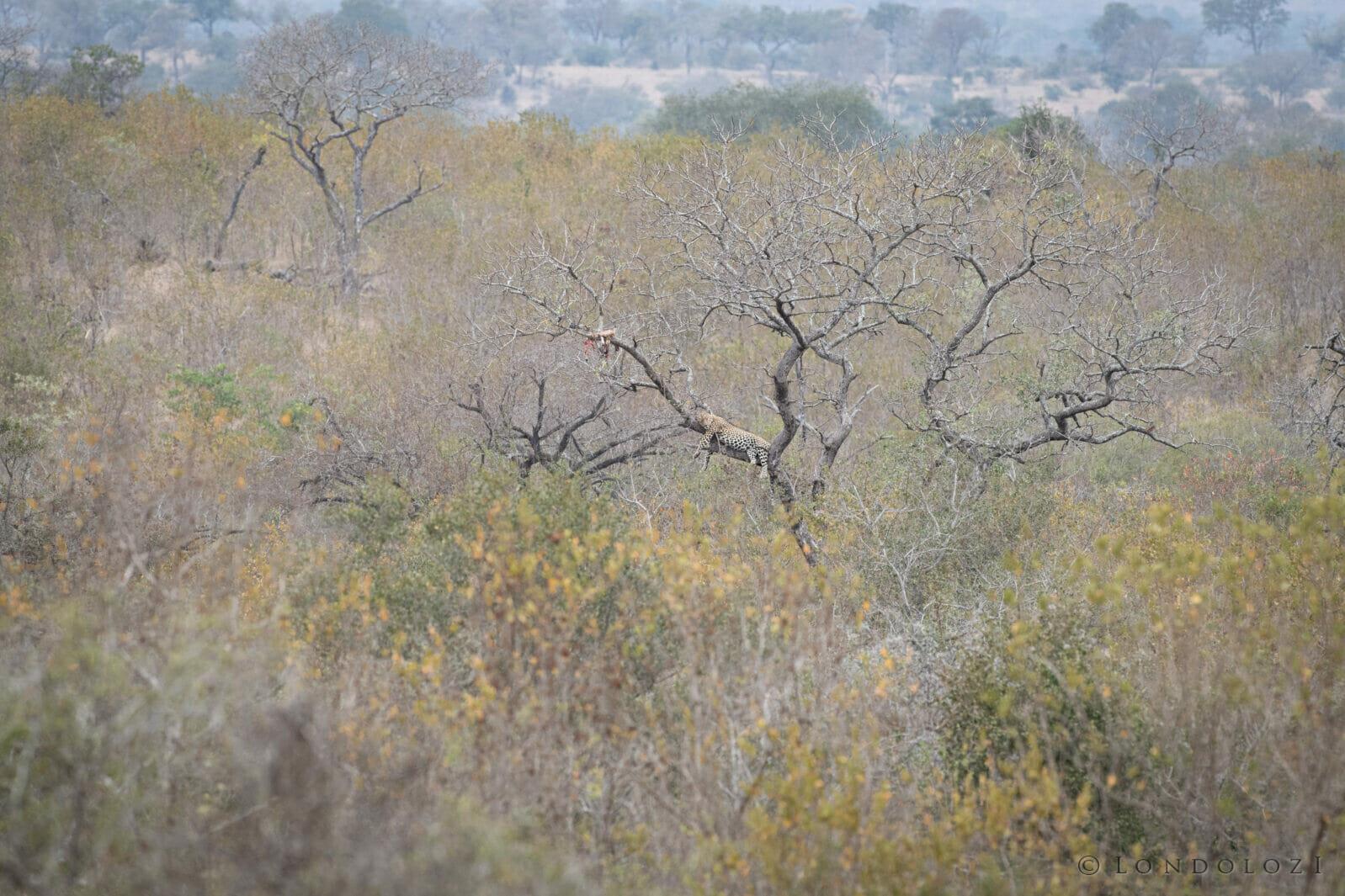 Jts Senegal Bush Tree Landscape