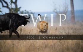 Twip #502