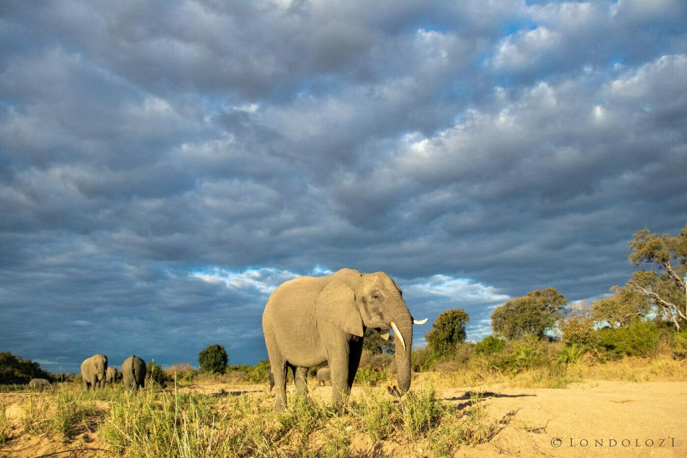 Ct Elephant Sand River 2