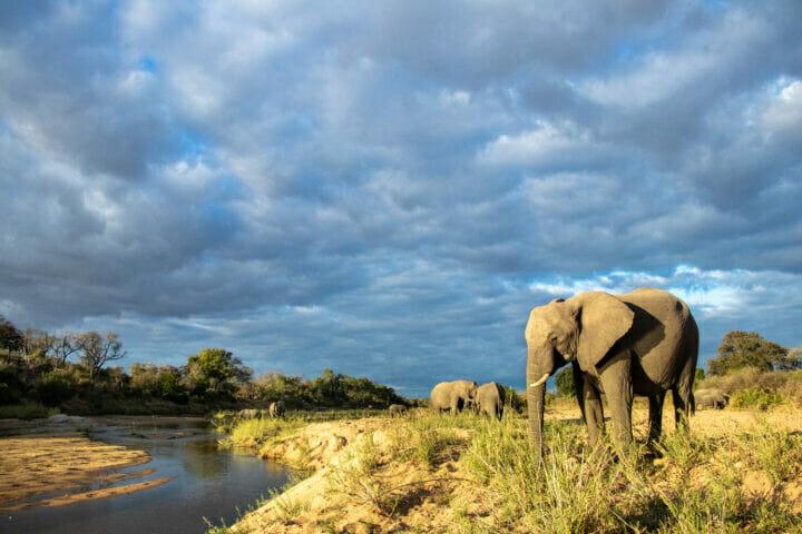 Ct Elephant Sand River 3