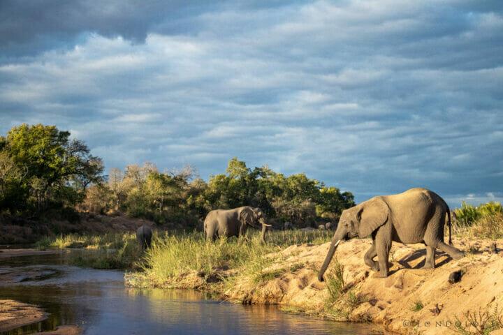 Ct Elephant Sand River 4