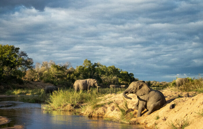 Ct Elephant Sand River 5
