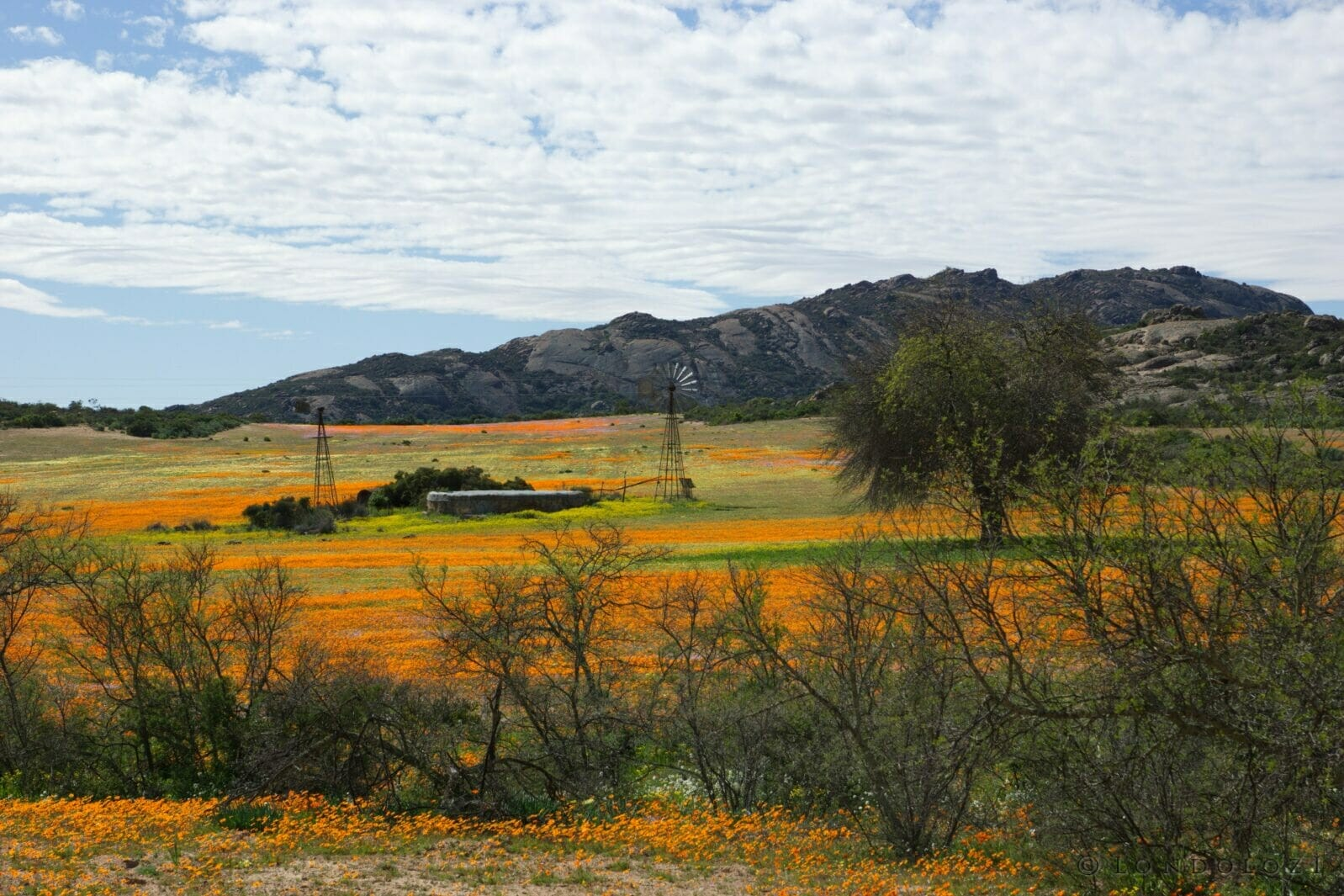 Wild flowers Namaqualand Cape Town