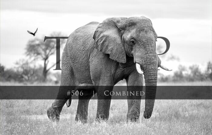 Twip #506 Rcb Elephant