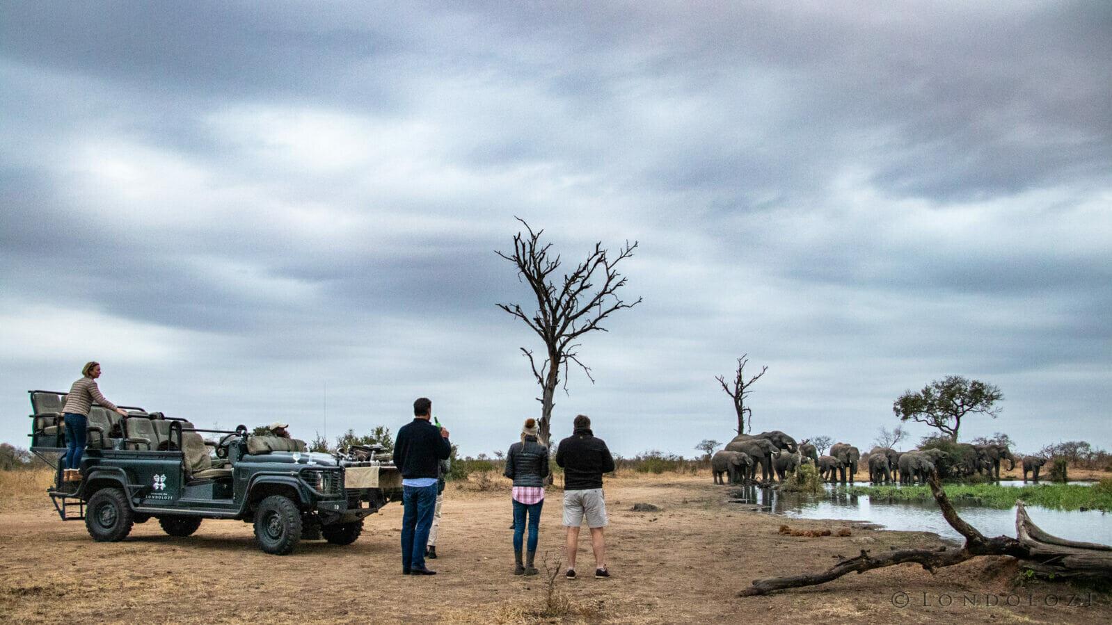 Ct Elephants Drinks Stop Weavers Nest 1