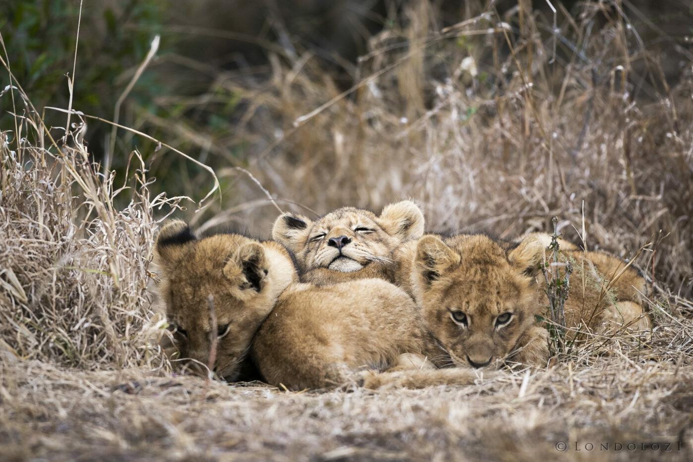 Sdz Ntsevu Cubs Rest Aug 2021