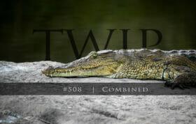 Twip #508 Crocodile Sz
