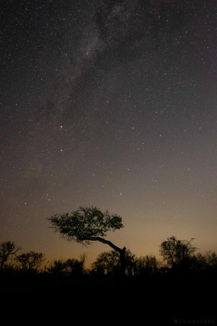 Star Tree Night Dean De La Rey Dlr 09:21