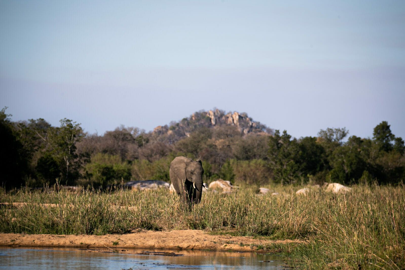 Sdz Elephant Finfoot Stwise